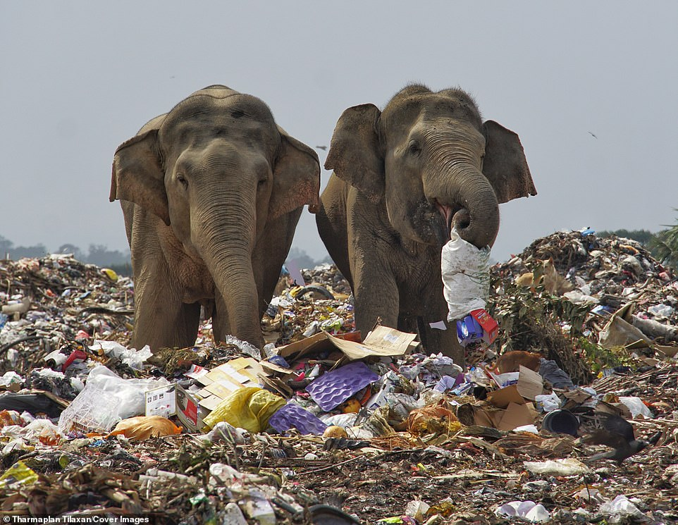 33851386 8793727 The open garbage dump is nestled in the jungles of the Eastern P a 5 16015479210501